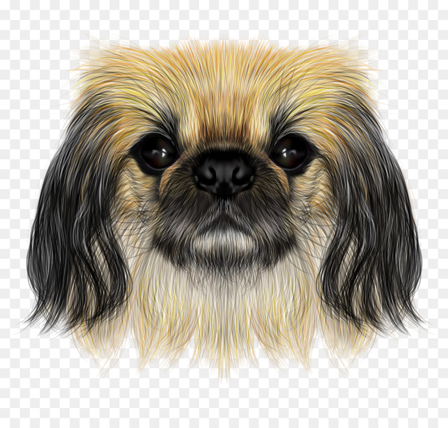 Shih Tzu Pekingese Yorkshire Terrier Chinese Crested Dog Filhote