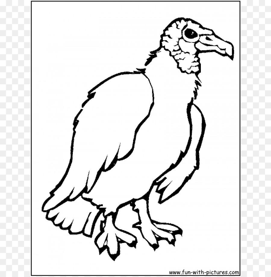 Urubu Aves Livro De Colorir Png Transparente Gratis