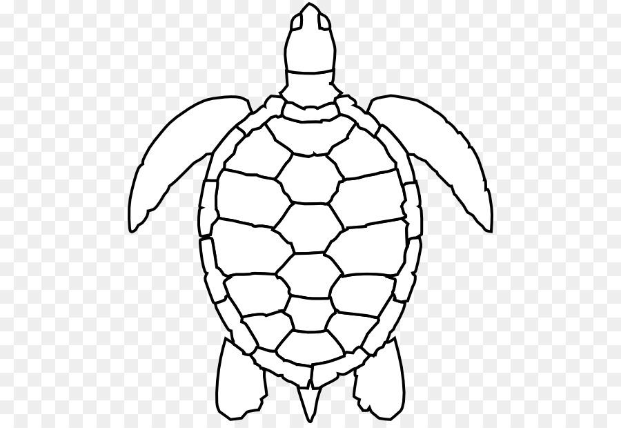 Tartaruga Tartaruga Marinha Tartarugaverde Png Transparente Gratis