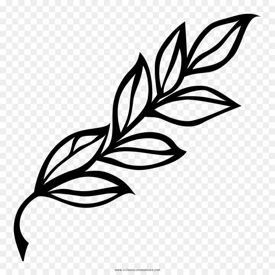Baia De Louro Desenho Folha Png Transparente Gratis