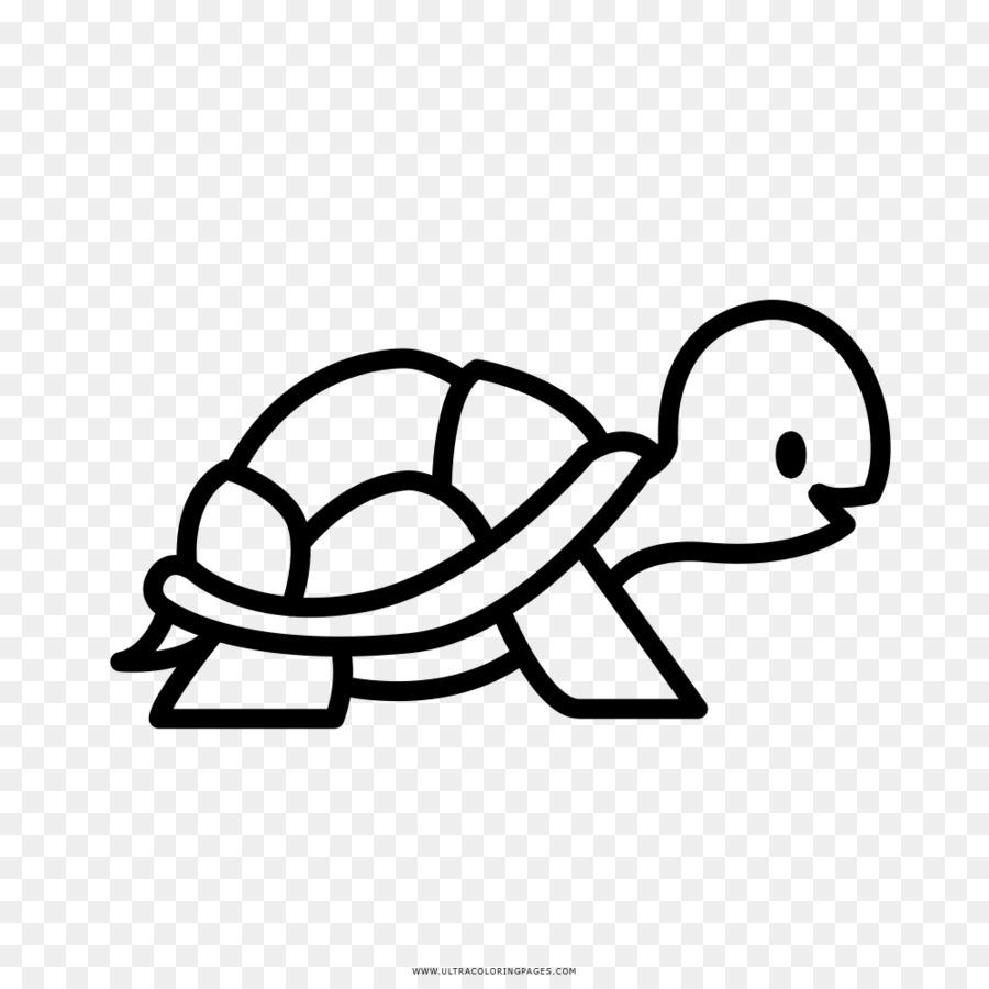 Tartaruga Livro De Colorir Desenho Png Transparente Gratis