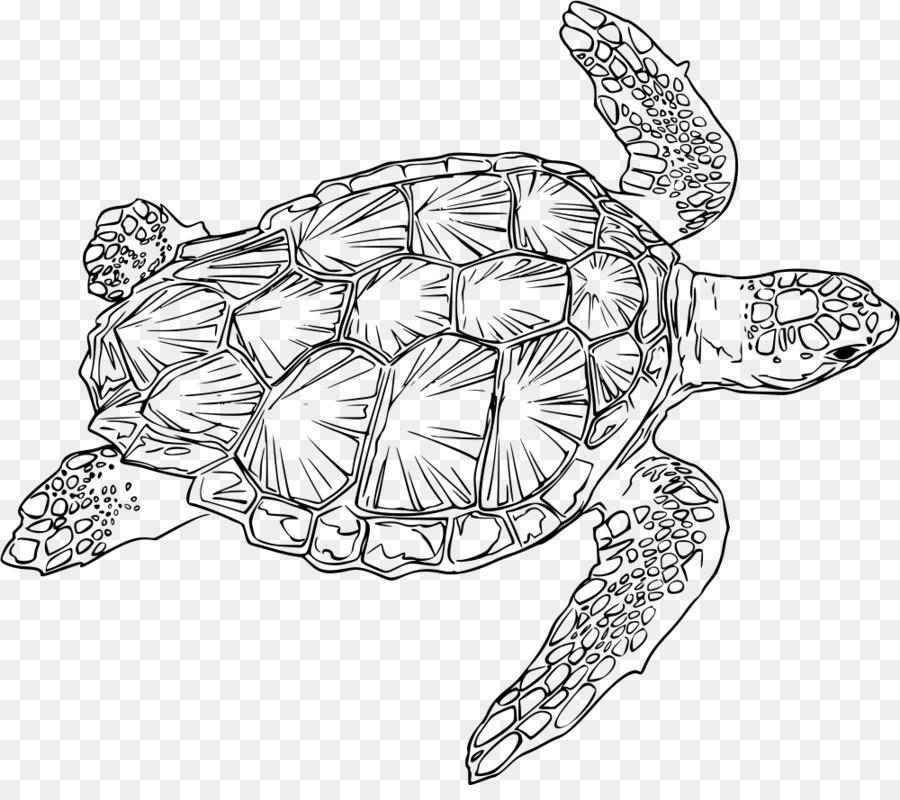 Tartaruga Tartarugacabecuda Tartaruga Marinha Png Transparente