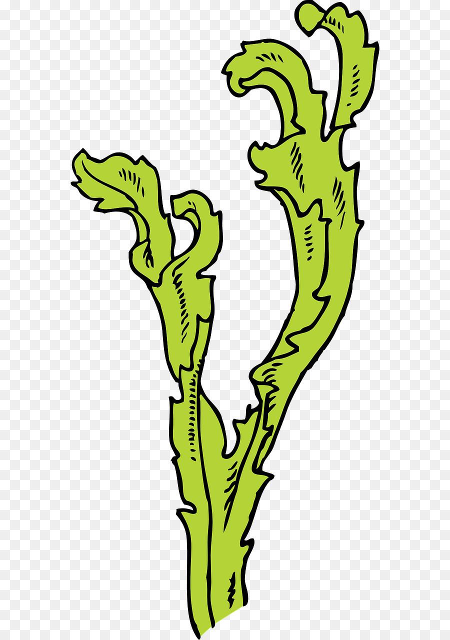 Algas Alga Marinha Papel De Parede Da Area De Trabalho Png