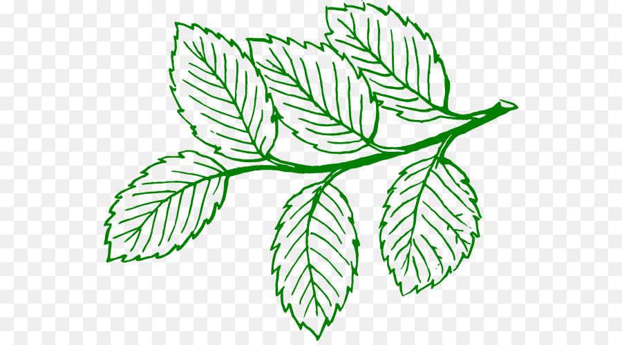 Folha árvore Desenho Png Transparente Grátis
