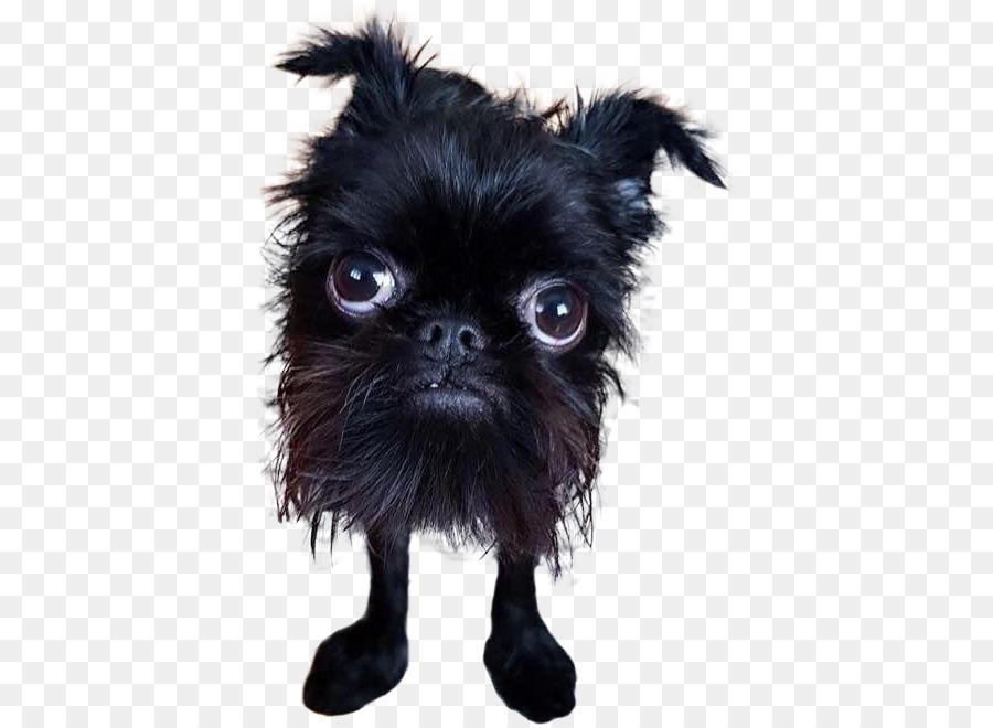 Filhote De Cachorro Do Mundo Concurso De Cão Mais Feio